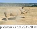 코뿔소, 포유, 동물 29492039