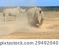 animal, rhino, rhinoceros 29492040