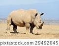 동물, 코뿔소, 포유 29492045