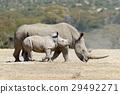 동물, 코뿔소, 포유 29492271