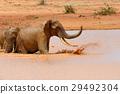 elephant, animal, nature 29492304
