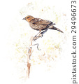 Brown Bird Watercolor 29496673