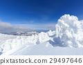 摻鋁氧化鋅 覆有霜的樹 冰霜覆蓋的樹木 29497646