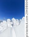 摻鋁氧化鋅 覆有霜的樹 冰霜覆蓋的樹木 29498004