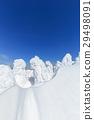 摻鋁氧化鋅 覆有霜的樹 冰霜覆蓋的樹木 29498091