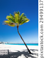 Sandy tropical beach with palm tree and white sand 29499137