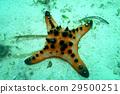 海 大海 海洋 29500251
