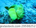 海 大海 海洋 29500252