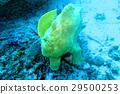 海 大海 海洋 29500253
