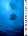 海 大海 海洋 29500259