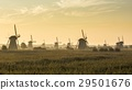 Kinderdijk in the morning with fog 29501676