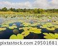 Lake with water Lily and Clouds 29501681
