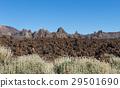 Lava Field El Teide with shrubs 29501690