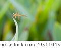 Wildlife in an ecosystem! 29511045