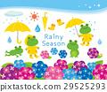 雨季 梅雨 繡球花 29525293
