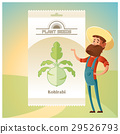 Pack of Kohlrabi seeds icon 29526793