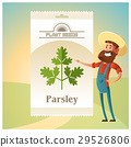Pack of Parsley seeds icon 29526806