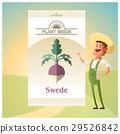 Pack of Swede seeds 29526842