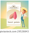 Pack of Sweet potato seeds 29526843