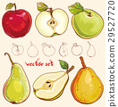 Vector set with fresh apples and pears 29527720