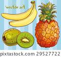 Vector set with banana, kiwi, pineapple 29527722