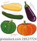 eggplant, pumpkin, squash 29527724