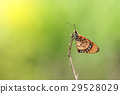 Butterfly on dried  branch 29528029