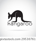 Vector of a kangaroo on white background.  29530761