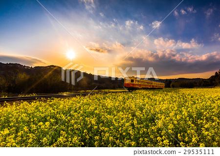 코미나토테츠도, 코미나토 철도, 유채꽃 밭 29535111