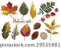 Vector set with autumn leaves 29535881