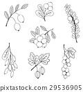 pattern, seamless, sketch 29536905