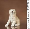 猫 猫咪 动物 29537961