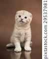 猫 猫咪 动物 29537981