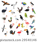 big vector birds set 29540146