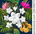 背景 開花 花朵 29548075