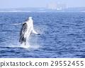 海 大海 海洋 29552455