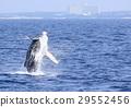 海 大海 海洋 29552456