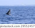 海 大海 海洋 29552457