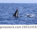 海 大海 海洋 29552458