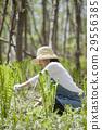 산나물 수확 29556385