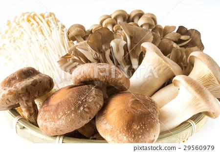 버섯 여러가지 표고 버섯 부나시메지 팽이 버섯 새송이 버섯 마이 타케 버섯 29560979