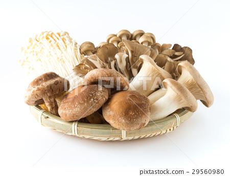 버섯 여러가지 표고 버섯 부나시메지 팽이 버섯 새송이 버섯 마이 타케 버섯 29560980