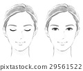 臉的黃金比例的圖像 29561522