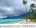 Palm trees on Temae Beach in Moorea island 29562942