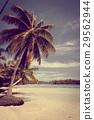 beach tropical paradise 29562944
