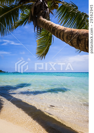 Paradise tropical beach and lagoon, Moorea Island 29562945
