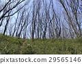 수목, 나무, 숲 29565146