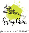 Vector illustration of spring onion. Hand drawn 29568037