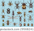 big set of insects bugs beetles and bees many 29568241