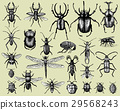 vector, bug, insect 29568243